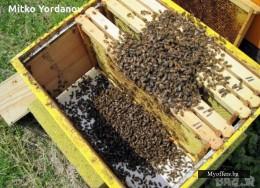 Продавам Пчелни Отводки с майки гр. Търговище село Певец