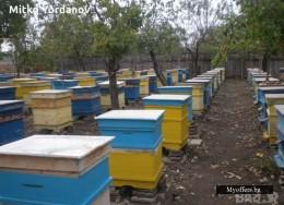 Продавам пчелни семейства с кошерите гр Търговище, село Певец