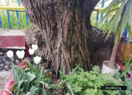 къща за гости с фонтан, градина и параклис-с намалена цена